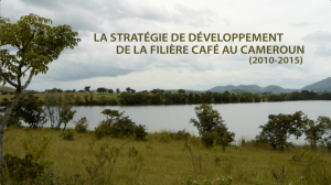 La stratgie de dveloppement de la filire caf au Cameroun